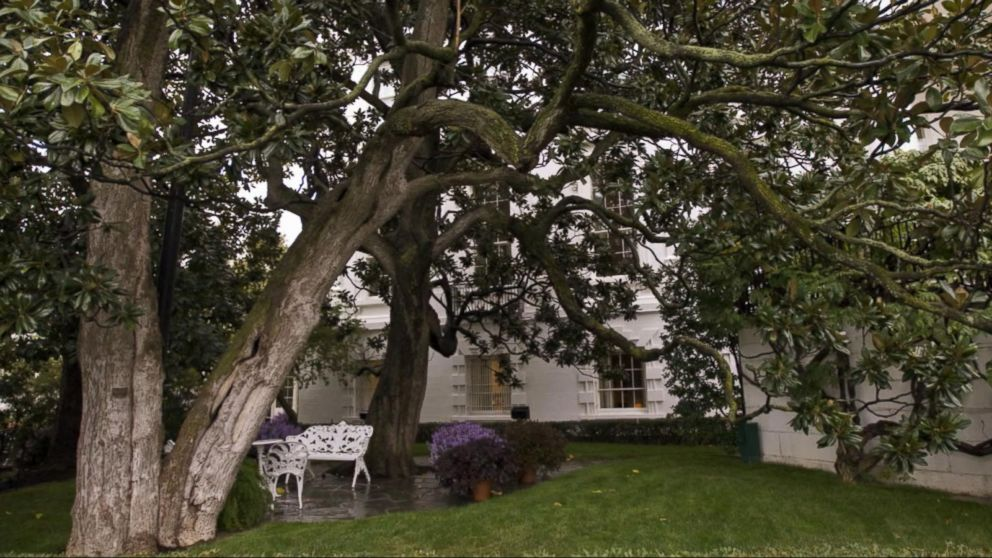 White House To Remove Portion Of Famed Magnolia Tree Planted By