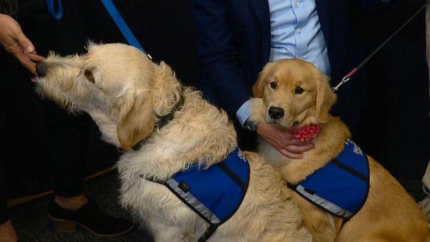Comfort dogs bring healing