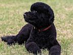 PHOTO: Sunny, the new Obama family dog,