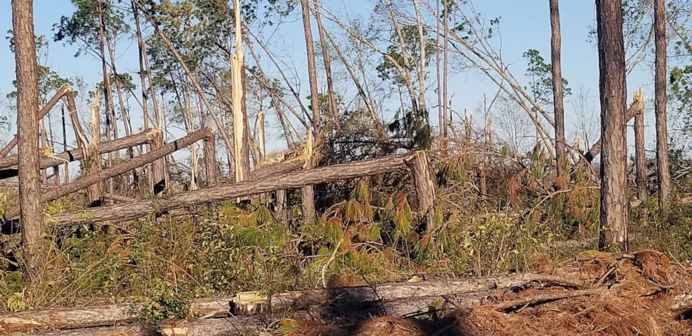 PHOTO: Damage from Hurricane Michael is seen at the McMillan Farm.