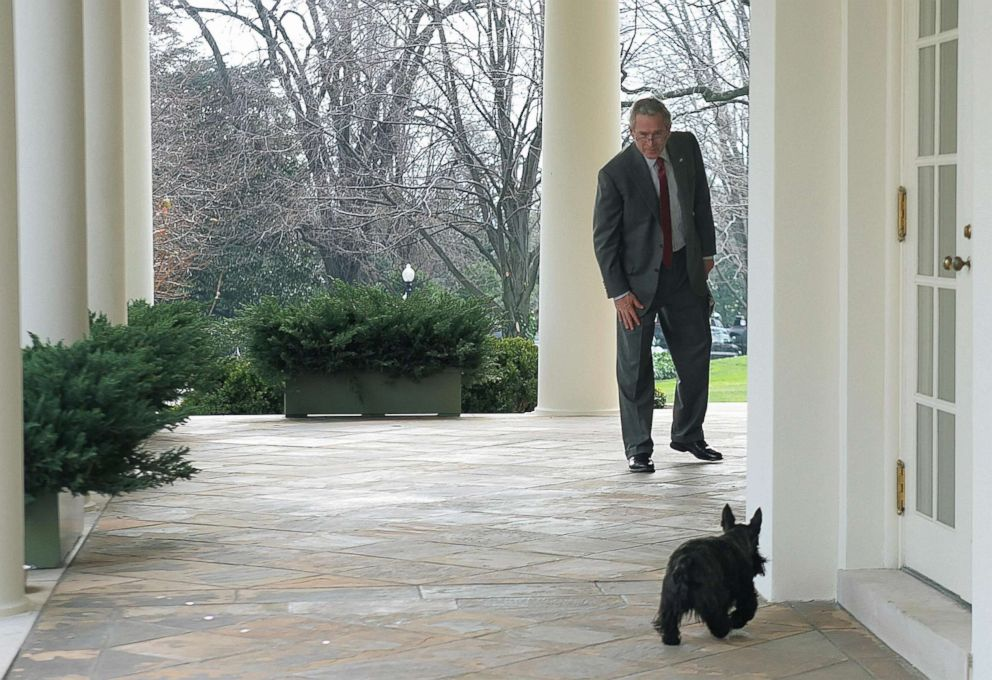 President George W. Bush calls for his dog Miss Beazley from the Oval Office, Jan. 24, 2007.