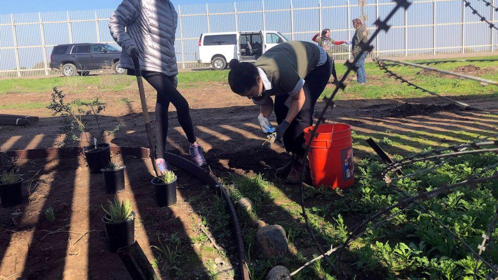 Border Patrol ermöglicht Neubepflanzung nach Bulldozern Garten