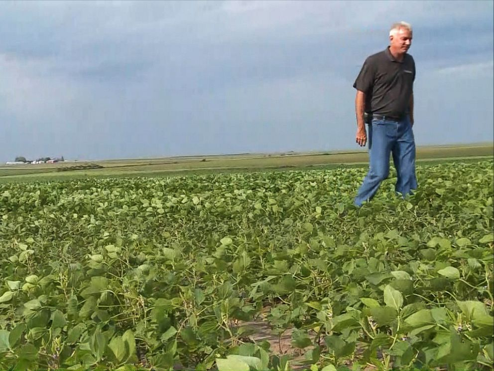 PHOTO: Farmers face a nearly 20 percent drop in the price of soybean harvests this year and more than 15 percent drop in the price of corn, according to the Iowa Corn Growers Association. The new tariffs are seen as the primary cause.
