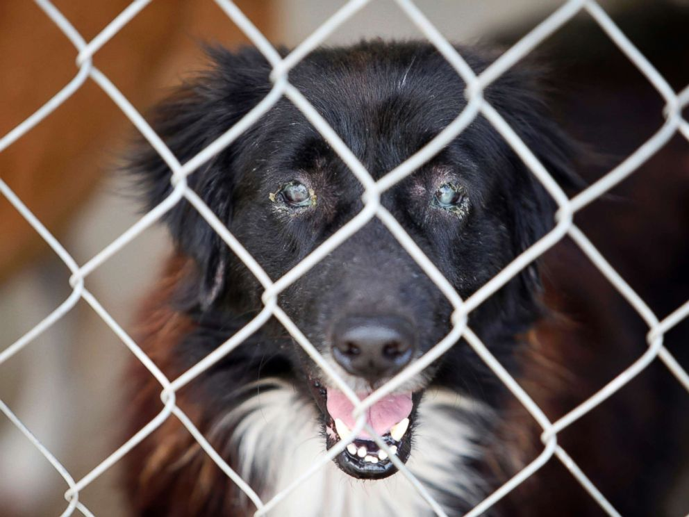 PHOTO: The Humane Society of the United States is working with the Puerto Rican government on a wide-ranging project to improve the lives of animals in the commonwealth.