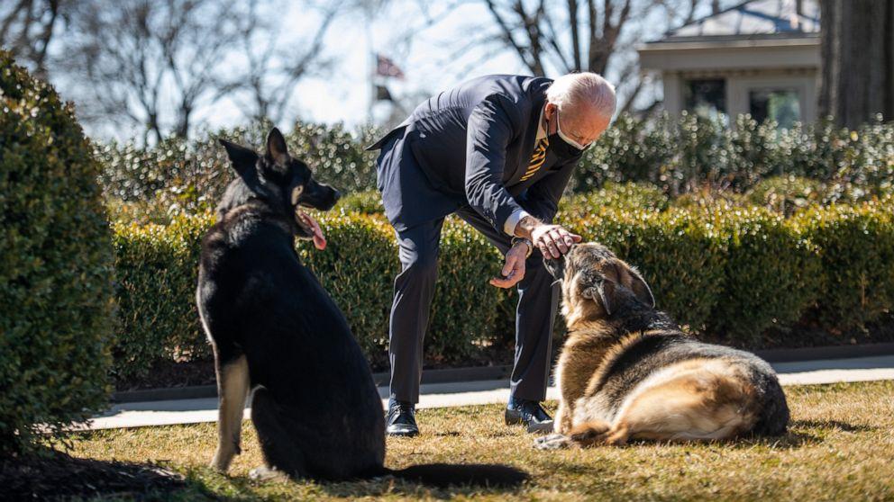 FOTO: El presidente Joe Biden juega con los perros de la familia Biden Champ, derecha, y Major, izquierda, el 9 de febrero de 2021 en la Casa Blanca el 24 de febrero de 2021 en Washington, DC
