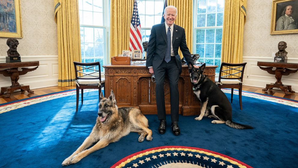 Biden says Major out of 'dog house' but getting 'training' after White  House incident - ABC News