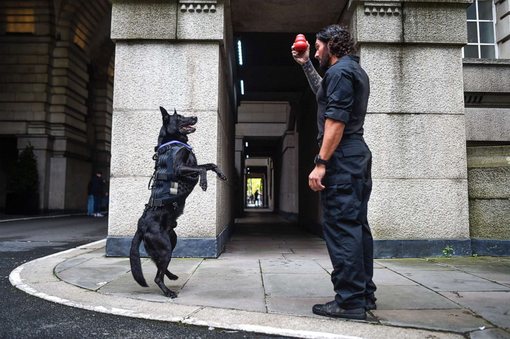 PHOTO:Special Operations Canine Hurricane plays with his handler Officer Marshall Mirarchi on Oct. 4, 2019 in London.