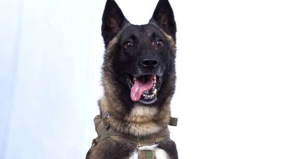 What we know about the military dog injured in the al-Baghdadi raid