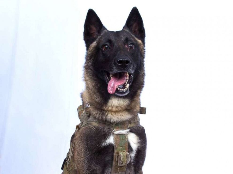 PHOTO: President Donald Trump posted a photo saying this is the dog that was involved in the capturing and killing of ISIS leader Abu Bakr al-Baghdadi, Oct. 28, 2019.