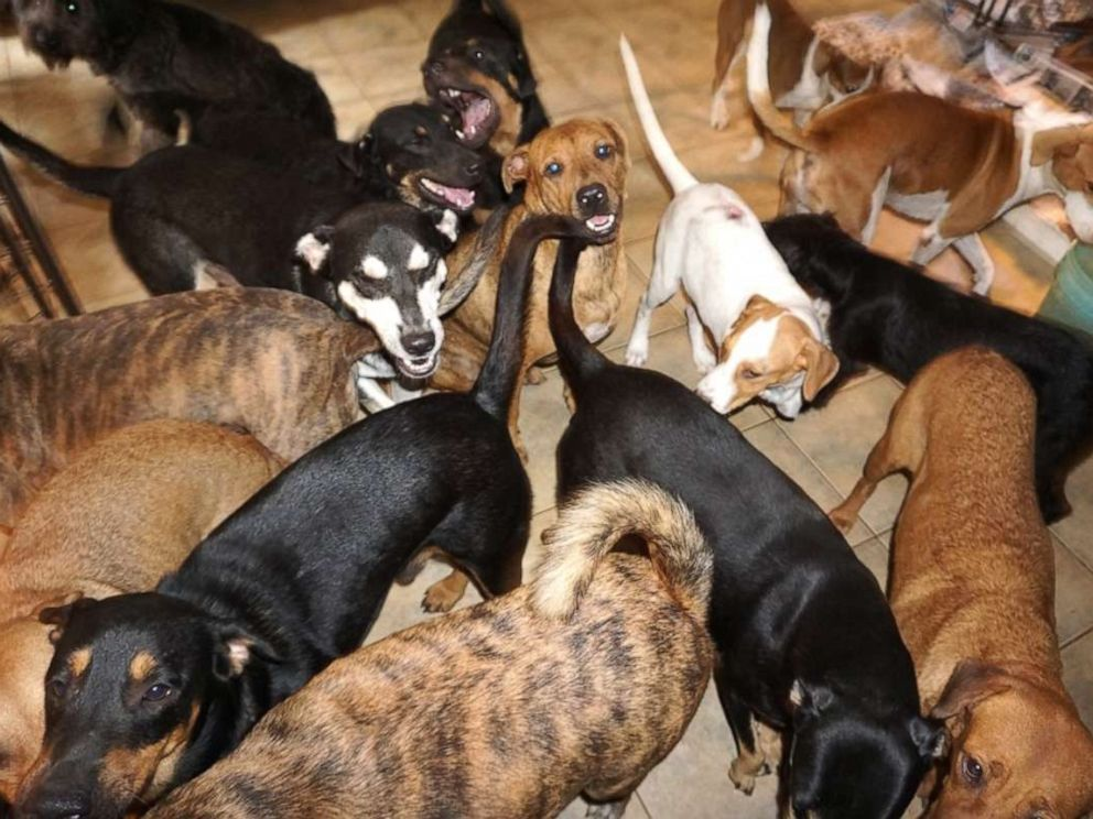 PHOTO: Chella Phillips has opened her home in Nassau, Bahamas, to 97 dogs to rescue them from the Hurricane Dorian.