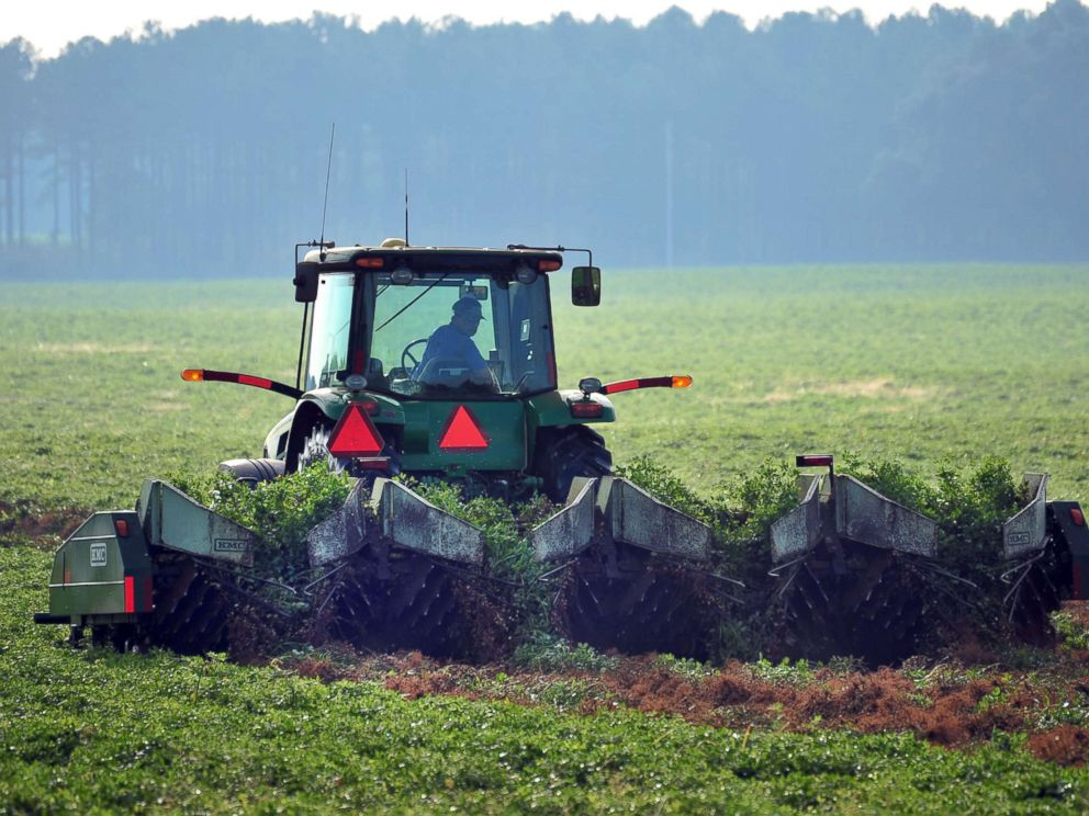 PHOTO: Ray Morris plows up peanuts at his farm near Leesburg, Ga., Oct. 25, 2012.
