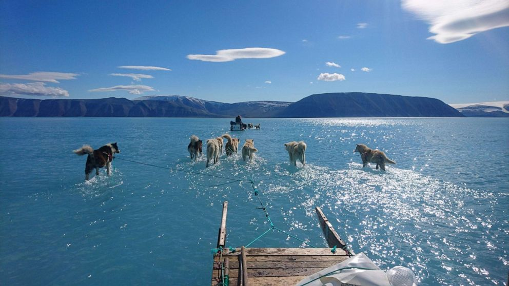 PHOTO: Sled dogs wade through standing water on the sea ice during an expedition in North Western Greenland, June 13, 2019.