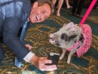 Congressman Faces Off With Pork