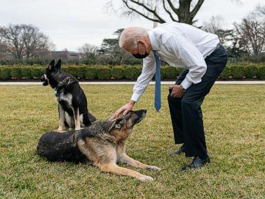 Bidens announce their German shepherd, Champ, has died