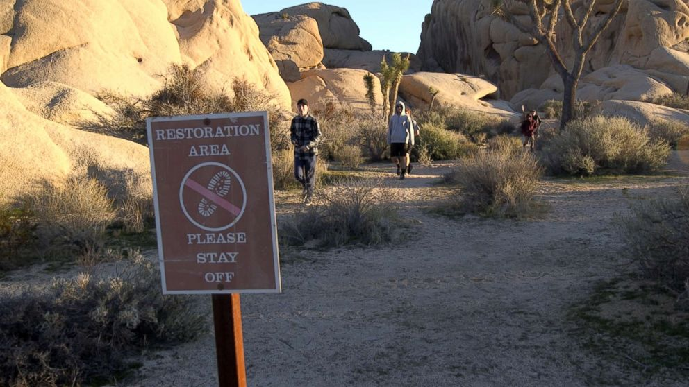 """Visitors walk through a sensitive """"restoration area"""" at Joshua Tree National Park in January 2019, during a partial government shutdown."""