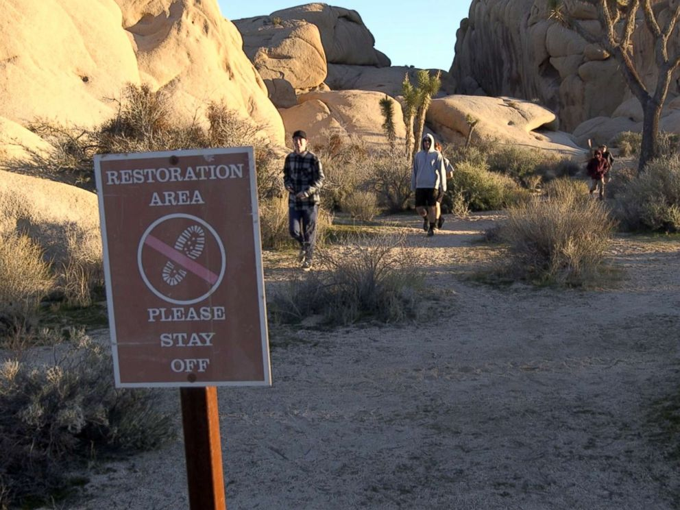 PHOTO: Visitors walk through a sensitive restoration area at Joshua Tree National Park in January 2019, during a partial government shutdown.