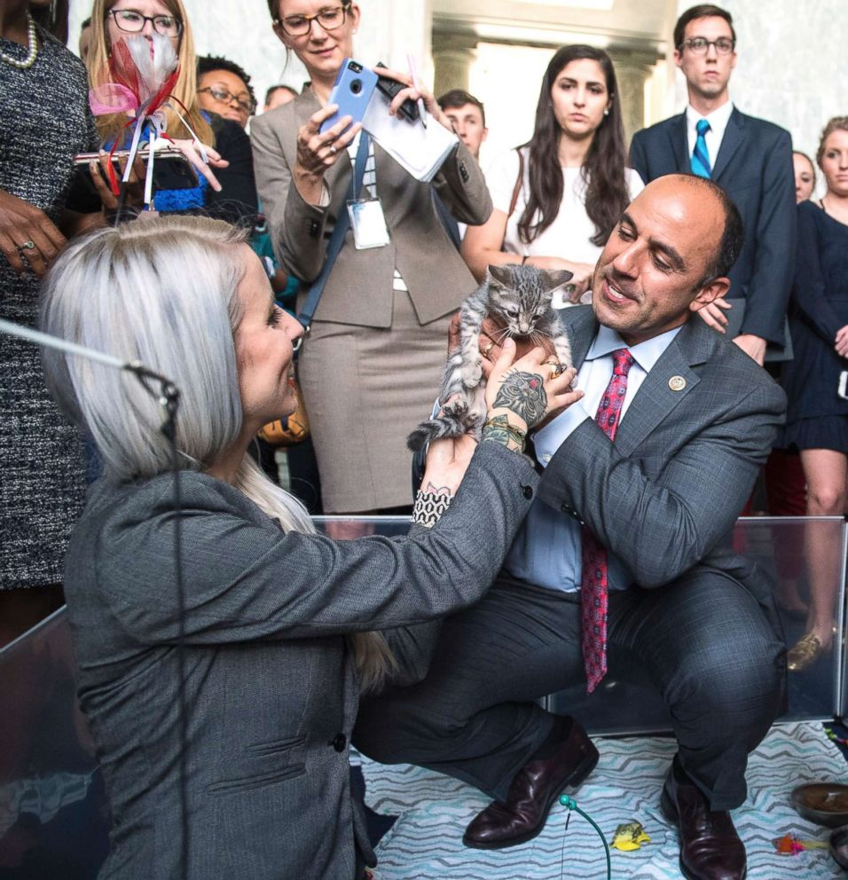 "Rep. Jimmy Panetta, center, Hannah Shaw, an animal advocate know as ""Kitten Lady,"" play with kittens during a event on bipartisan legislation to end the Department of Agriculture's scientific testing on kittens, June 7, 2018."