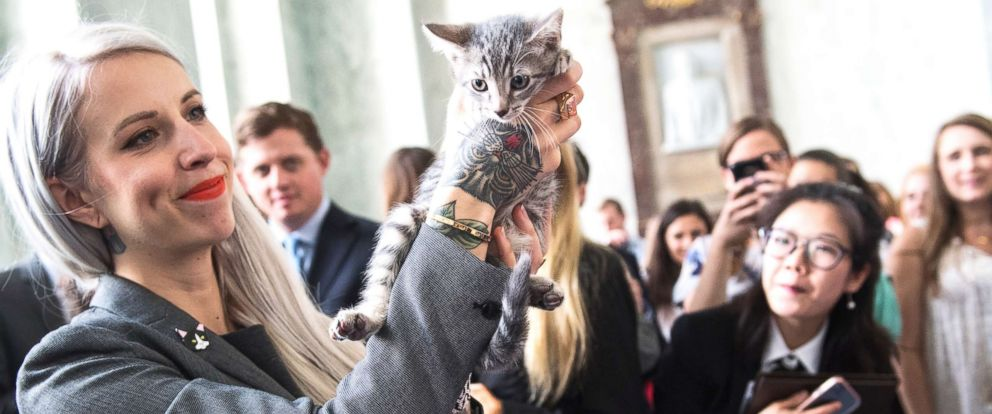 """PHOTO: Hannah Shaw, an animal advocate known as """"Kitten Lady,"""" attends an event on bipartisan legislation introduced by Reps. Jimmy Panetta and Mike Bishop to end the Department of Agricultures scientific testing on kittens on June 7, 2018."""