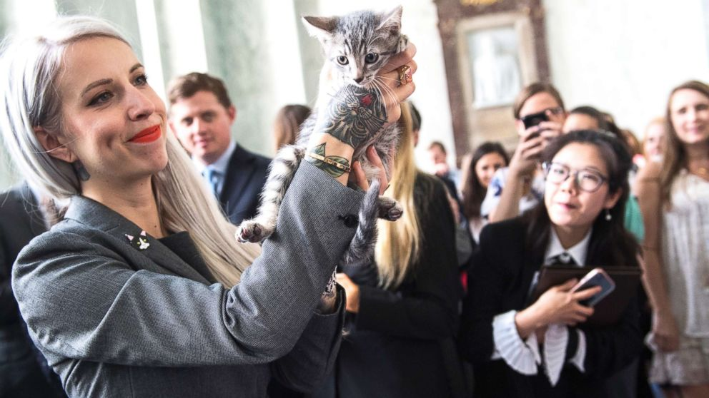 "Hannah Shaw, an animal advocate known as ""Kitten Lady,"" attends an event on bipartisan legislation introduced by Reps. Jimmy Panetta and Mike Bishop to end the Department of Agriculture's scientific testing on kittens on June 7, 2018."