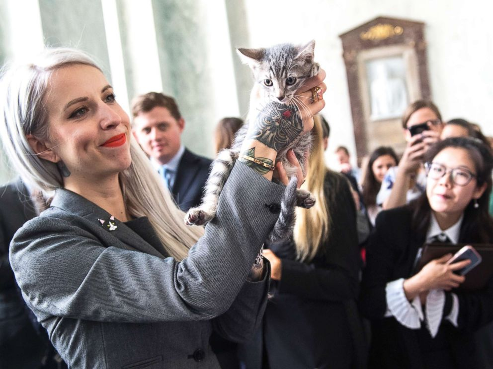 PHOTO: Hannah Shaw, an animal advocate known as Kitten Lady, attends an event on bipartisan legislation introduced by Reps. Jimmy Panetta and Mike Bishop to end the Department of Agricultures scientific testing on kittens on June 7, 2018.