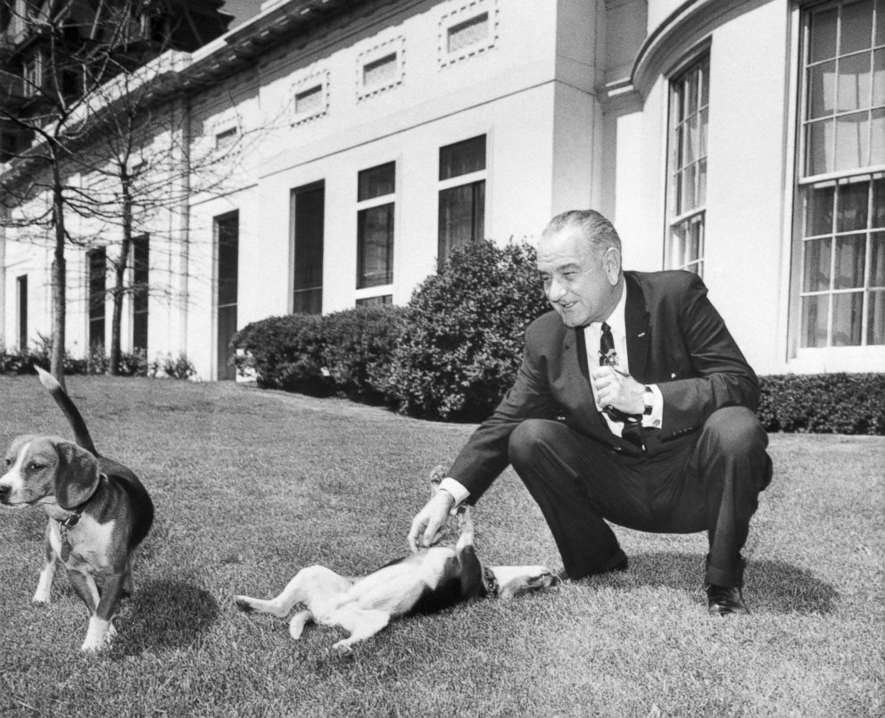 President Johnson scratches the belly of one of his two beagles (named Him and Her) on the White House lawn, April 12, 1964.