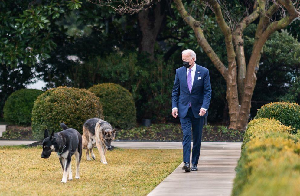 FOTO: El presidente Joe Biden camina con sus perros Major, front y Champ en el Rose Garden de la Casa Blanca en Washington, el 26 de enero de 2021.