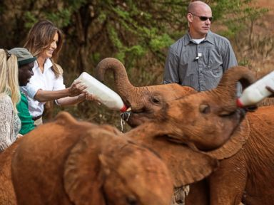 Melania Trump feeds a baby elephant