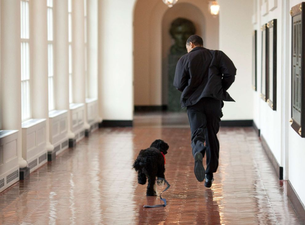 President Barack Obama runs down a corridor with the family's new dog, Bo, a six-month old Portuguese water dog, at the White House, April 13, 2009.