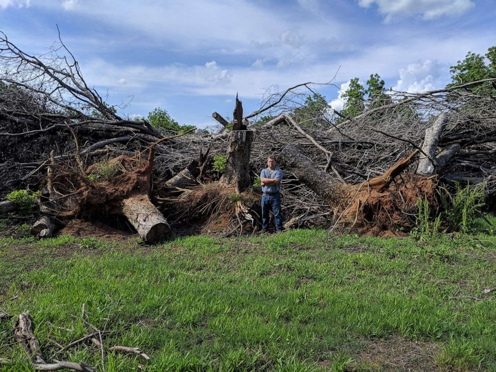 PHOTO: Pecan farmer Trey Pippin stands with the remains of some of the more than 12,550 trees that he says were destroyed on his Georgia farm by hurricane Michael in 2018.