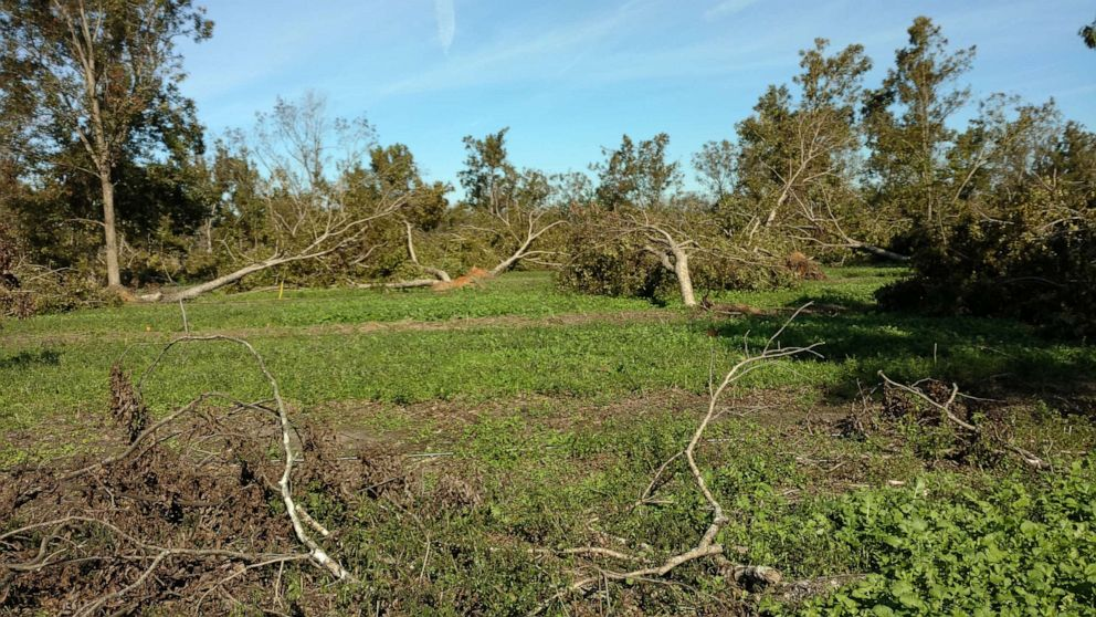 PHOTO: Pecan trees that were damaged by hurricane Michael are pictured on Trey Pippins farm in Leesburg, Ga., in this undated handout photo.