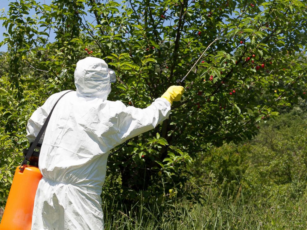 PHOTO: Farmer spraying toxic pesticides is seen in this undated photo.