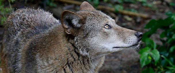 Endangered Species List 2020.Trump Administration Weakens Endangered Species Rules