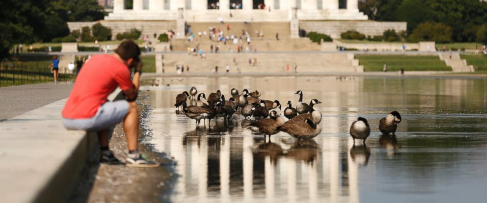 PHOTO: A man photographs geese in the reflecting pool in front of the Lincoln Memorial in Washington, Aug. 20, 2013.