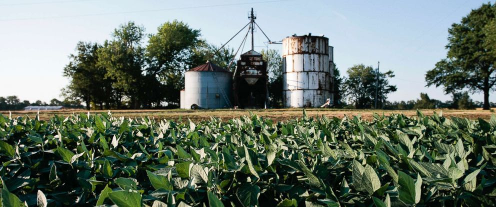 PHOTO: A soybean farm is seen in this undated stock photo.