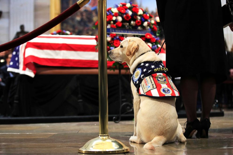 PHOTO: Sully, former President George H.W. Bushs service dog, pays his respect to President Bush as he lies in state at the U.S. Capitol in Washington, Dec. 4, 2018.