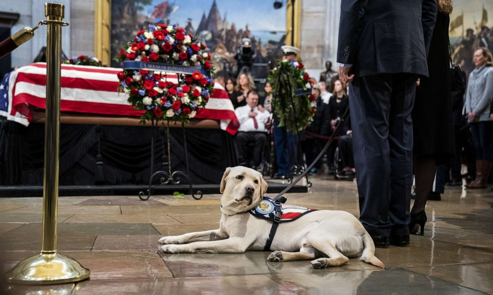 Sully, a yellow Labrador service dog for former President George H. W. Bush, sits near the casket of the late President at the U.S. Capitol, Dec. 4, 2018.