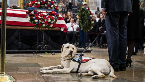 George H.W. Bush's former service dog takes on new role
