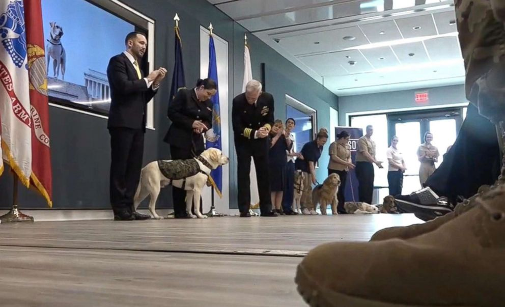 PHOTO: Former President George H. W. Bushs service dog, Sully, participates in an enlistment ceremony, joining the therapeutic dogs at Walter Reed National Military Medical Center in Bethesda, Md., Feb. 27, 2019.