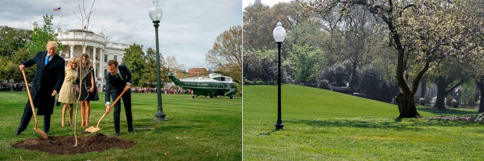 PHOTO: President Donald Trump and French President Emmanuel Macron plant a tree at the South Lawn of the White House on April 23, 2018 which mysteriously disappeared on April 28, 2018.