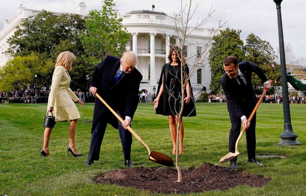 Where is the tree Macron gave Trump?