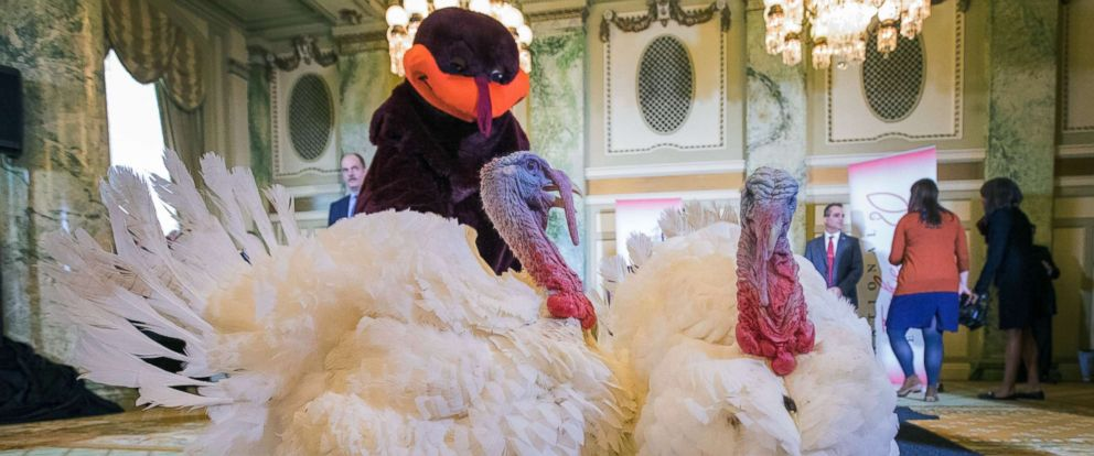 """PHOTO: Virginia Tech mascot HokieBird helps officials with the National Turkey Federation and the Willard InterContinental hotel introduce turkeys """"Peas"""" and """"Carrots"""" at the White House, Nov. 19, 2018."""