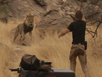 VIDEO: Lion charges trainer Dave Salmoni