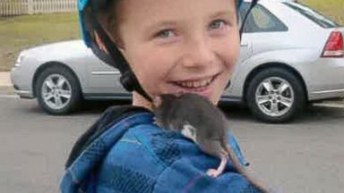 PHOTO: Aidan Pankey and one of his pet rats. Lawyers representing the Pankey family have filed a lawsuit against Petco Animal Supplies Inc., saying Aidan died from rat-bite fever contracted from a male rat purchased at one of the national chains stores.