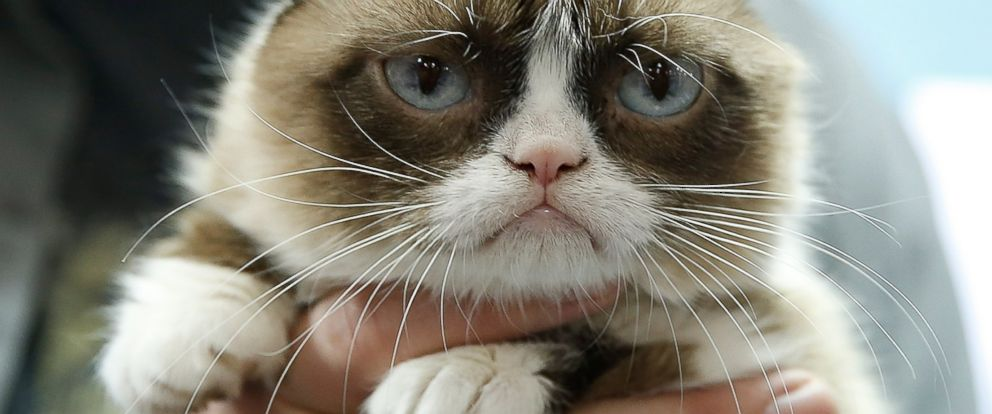 PHOTO: Grumpy Cat is pictured on Aug. 7, 2014 in New York City.