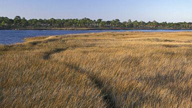 PHOTO: Coastal marsh along Apalachicola Bay, Barrier island, St George island State Park, Florida.