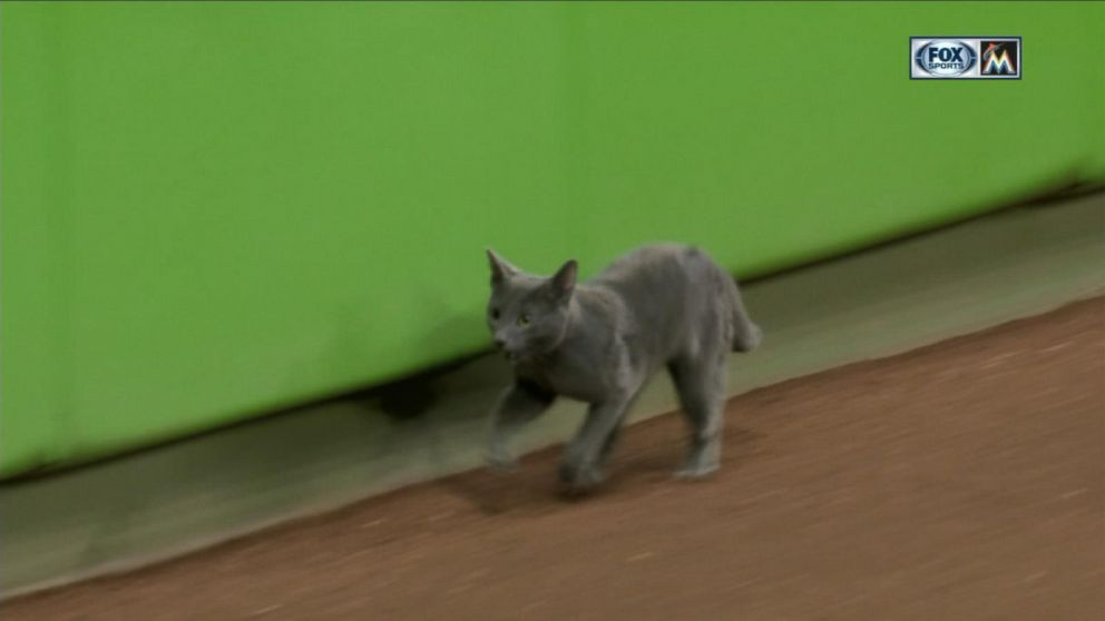 Miami Marlins game delayed after cat runs onto the field