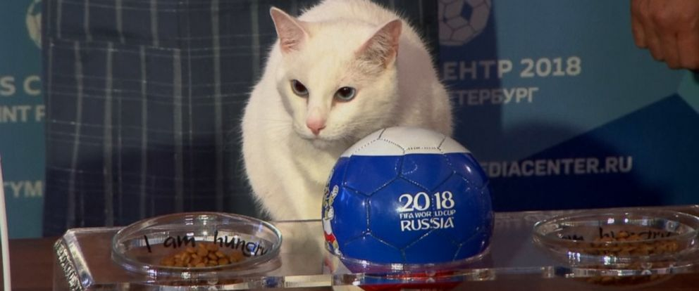 A deaf white cat named Achilles has been designated the official results predictor for this years soccer World Cup in Russia.