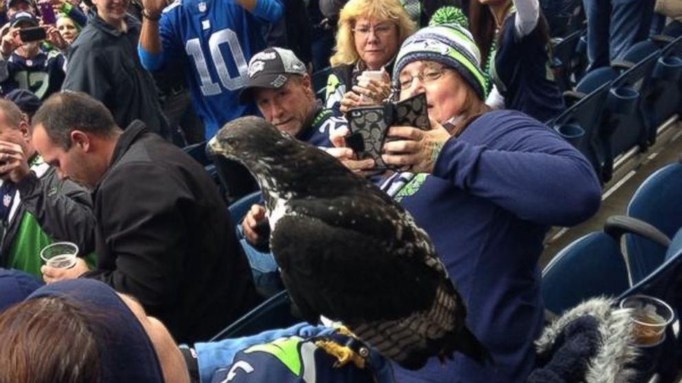 Seahawks Mascot Commits Personal Foul Perches On Fan S Head Abc News