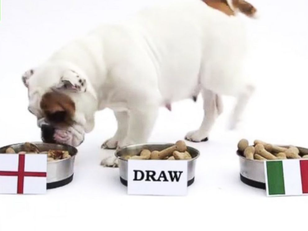 PHOTO: Roo the bulldog predicts an England victory in the first World Cup match.