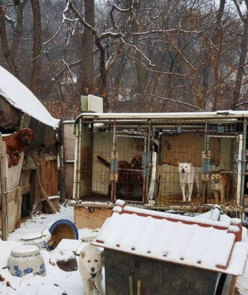 PHOTO: US Olympian Gus Kenworthy rescued a dog from this South Korean dog meat farm, which is shutting down. Kenworthy posted the photo on Instagram on Feb. 23, 2018.